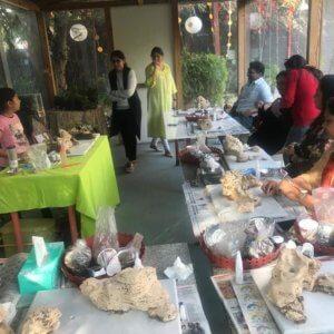 buy-online-Bonsai-plants-Mame-Kusamono-live-arts-creosora-21