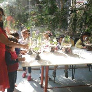 online-buy-Bonsai-plants-Mame-Kusamono-live-arts-creosora-3562