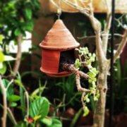 buy-online-decorative-plants-live-arts-creosora-infinite-creativity-63