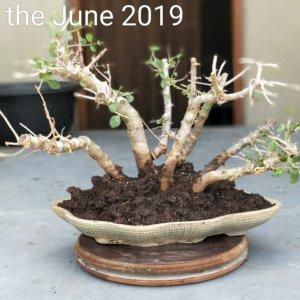 buy-online-decorative-plants-live-arts-creosora-infinite-creativity-71