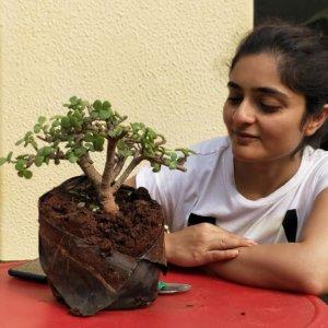 buy-online-decorative-plants-live-arts-creosora-infinite-creativity-49