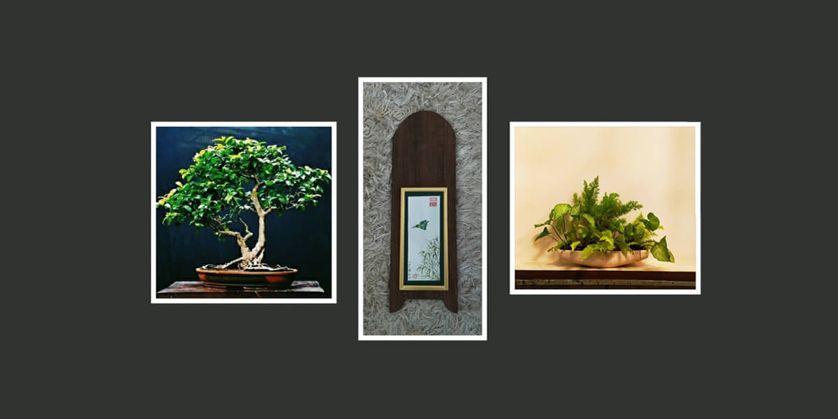buy-online-decorative-plants-live-arts-creosora-infinite-creativity-abc4fed