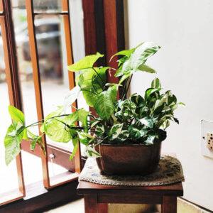 Indoor Plant decoration with Deepti Jhaveri Aunty