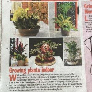 TOI Mirror cover the indoor plant arrangement workshop